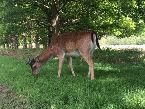 Where to run with deer in London