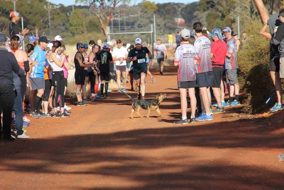 Meet Stormy, the dog who just ran a half marathon